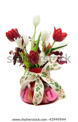Red and white Tulips in glass vase with a Christmas Holly berry themed ribbon around the vase isolated on white background