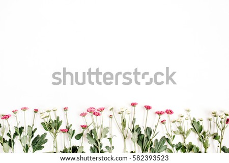 Red and white wildflowers on white background. Flat lay, top view. Creative flower background concept.