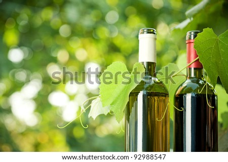 Red and white wine bottles and young vine against natural spring background