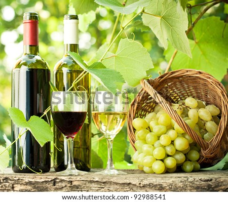 Red and white wine bottles, two glasses and bunch of grapes on old wooden table against vineyard