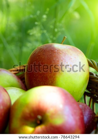 Red and yellow apples in the basket