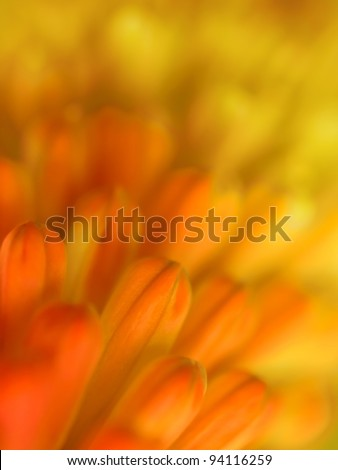 Red and yellow flower background, soft focus