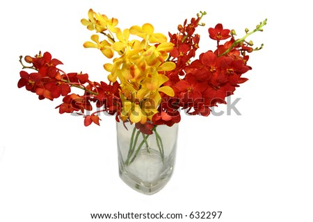red and yellow flowers 02
