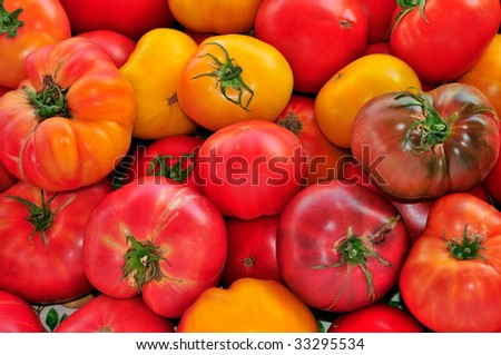 Red and Yellow Heirloom Tomatoes - stock photo