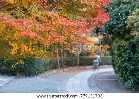 Red and yellow maple leaf in autumn season. - Shutterstock ID 779151703