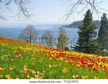 Red and yellow tulips in the grass on the Mainau island (Germany)