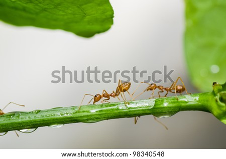 red ant in green nature or in forest