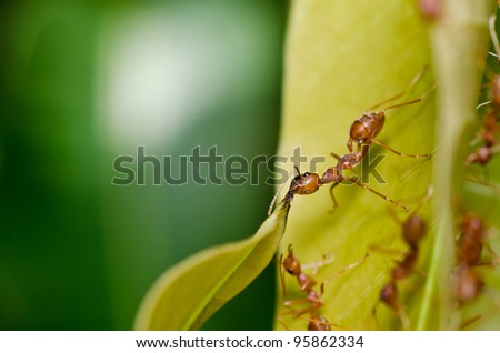 red ant power in green nature or in forest