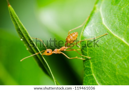 red ant power in the nature