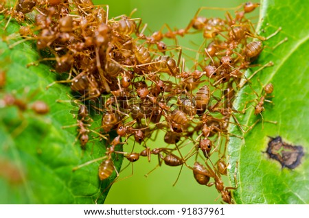 red ant teamwork in green nature or in the garden
