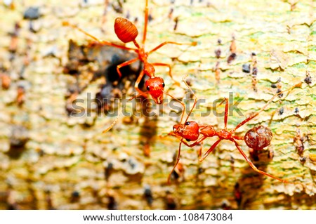 Red ants connecting with antennas conversation to do something