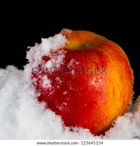 Red apple in the snow on a black background