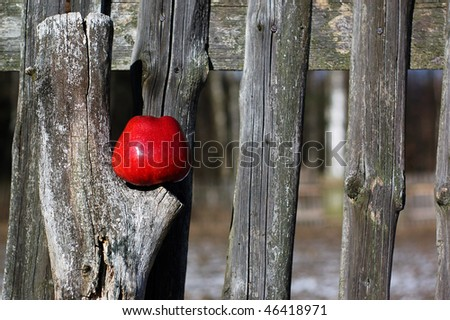 Red Apple over the old wooden fence as a symbol of natural origin