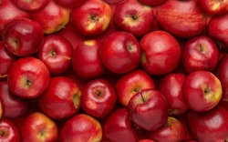 Red apples in large quantities