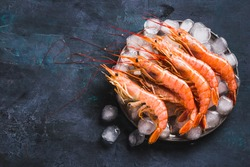 Red Argentine shrimps ocean jumbo shrimps copy space.