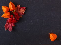 Red autumn berries and leaves on black slate background with place to text
