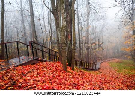Red autumn forest mist park fog stairway landscape. Forest mist stairway in red autumn scene. Red autumn stairway forest park view. Red autumn forest mist stair way landscape