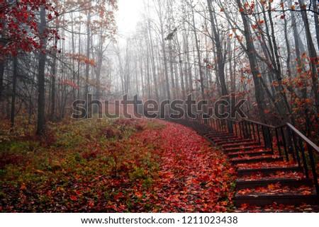 Red autumn forest mist park stair way landscape. Forest mist stairway to heaven in autumn fog. Red autumn forest mist stairway view up. Red autumn fog on forest stairway scene