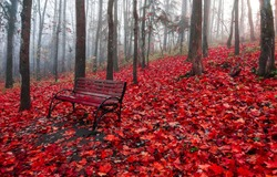 Red autumn forest park bench. Autumn park bench view. Wooden bench in red autumn forest park