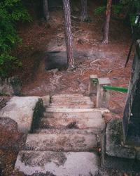 Red autumn forest park stair landscape. Autumn forest stairway view. Red autumn forest stairway down. Red autumn wallpaper
