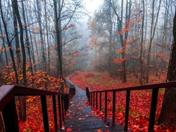 Red autumn forest park stair view. Misty forest red autumn stair landscape. Stair in red autumn misty forest park