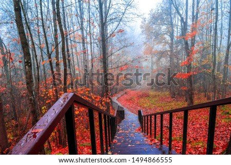 Red autumn forest park stairs view. Mist forest stairway in red autumn. Red autumn stair down view. Red autumn forest mist stairway view