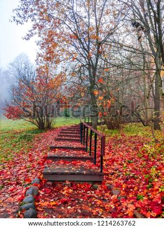 Red autumn forest stairway fog view. Autumn forest mist stairway scene. Autumn fog in forest mist background. Red autumn forest stairway view