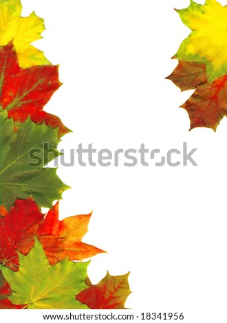 Red autumn leaves isolated on white, high quality picture with Clipping Path
