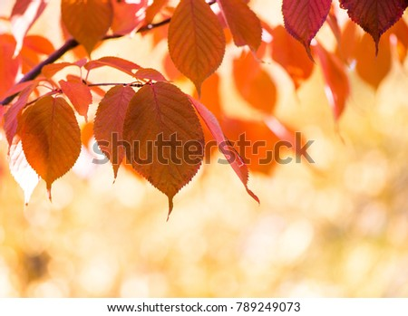 Red autumn leaves, very shallow focus, sunny autumnal day #789249073