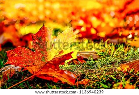Red autumn maple leaf macro view. Autumn maple leaf close up