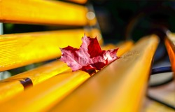 Red autumn maple leaf on park bench. Park bench autumn maple leaf. Maple leaf on wooden bench
