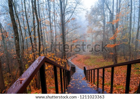 Red autumn misty forest park stair way landscape. Orange autumn forest mist stairway view. Autumn forest mist stairway down. Red autumn forest mist stairway panorama