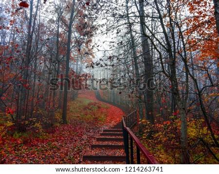 Red autumn mysterious forest mist stairway landscape. Autumn red forest stairway view. Red autumn forest stairway fog background. Autumn red forest stair way fog