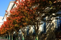 Red autumn trees at Butte-aux-Cailles quarter of Paris.