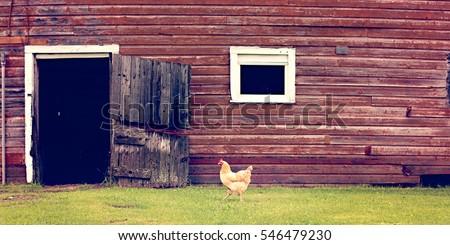 Red barn chicken