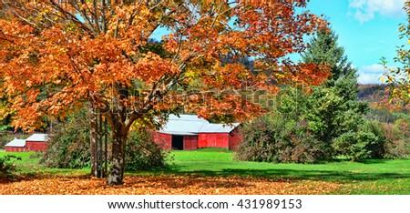 Red Barn Fall