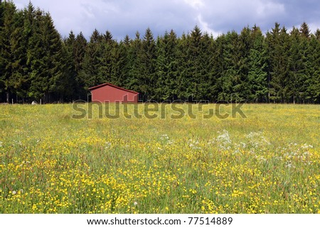 Red barn in a yellow flower field with green forest behind