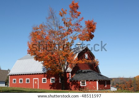 Red Barn with Fall Maple Tree