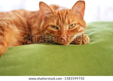 Red beautiful cat lies with opened eyes on a green sofa and looks in front of a bright window. Horizontal photo with pet