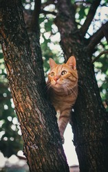 Red beautiful cat with big eyes sitting on a tree