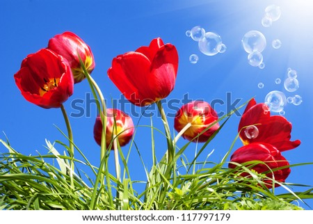 Red beautiful tulips on a blue sunny sky background
