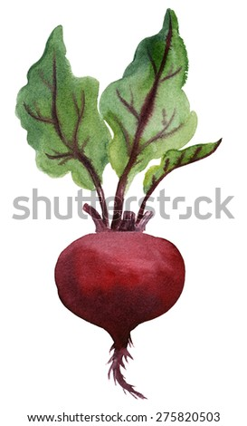 Red beet. Watercolor hand-drawn illustration.
