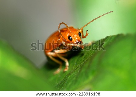Red beetle on leaf #228916198
