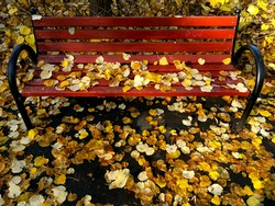 Red Bench In The Park In Autumn Landscape.  Beautiful . A Perfect Picture Of Autumn .