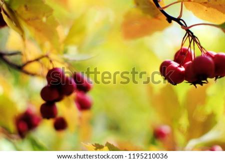 Red berries in the autumn garden #1195210036