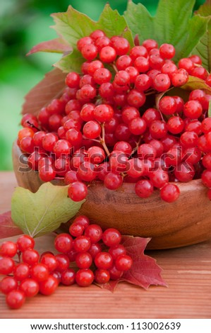 Red berries of viburnum in wooden bowl