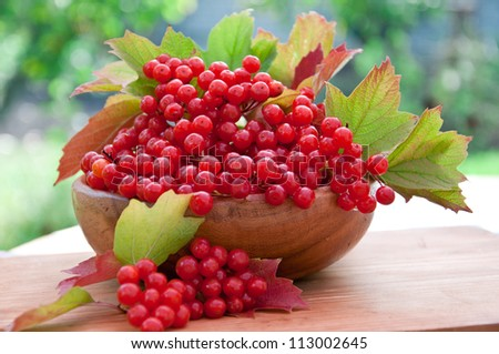 Red berries of viburnum in wooden bowl