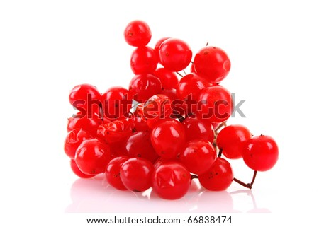 red berries of viburnum isolated on white #66838474