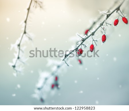 Red berries,winter nature with a snowfall,cosy winter photo to Christmas