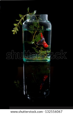 Red Betta fish in glass jars.